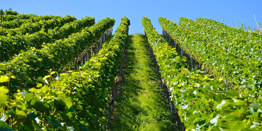 Wine Branding Strategy