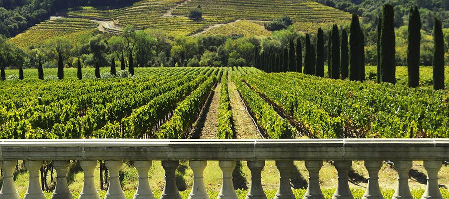 Wine Branding Social Media